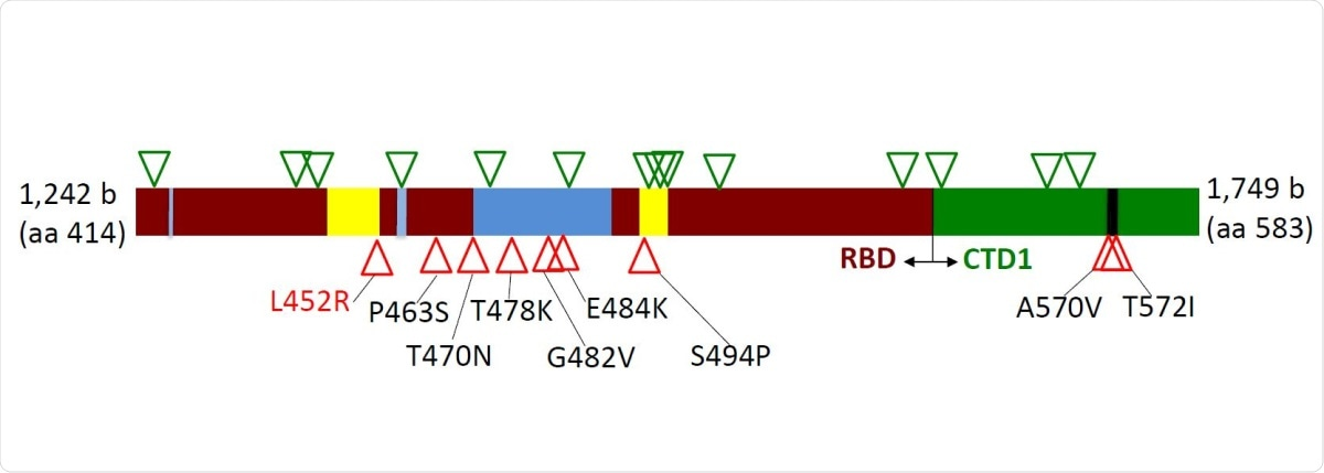Distribution of silent (green triangles) and amino acid (red triangles) mutations across region 414-583 of the Spike protein. Dark red – receptor-binding domain (RBD); Green – C-terminal domain 1 (CTD1) of S1 Spike region; Blue – receptorbinding ridge epitope residues; Yellow – 443-450 loop epitope residues; Black – 570-572 loop residues.