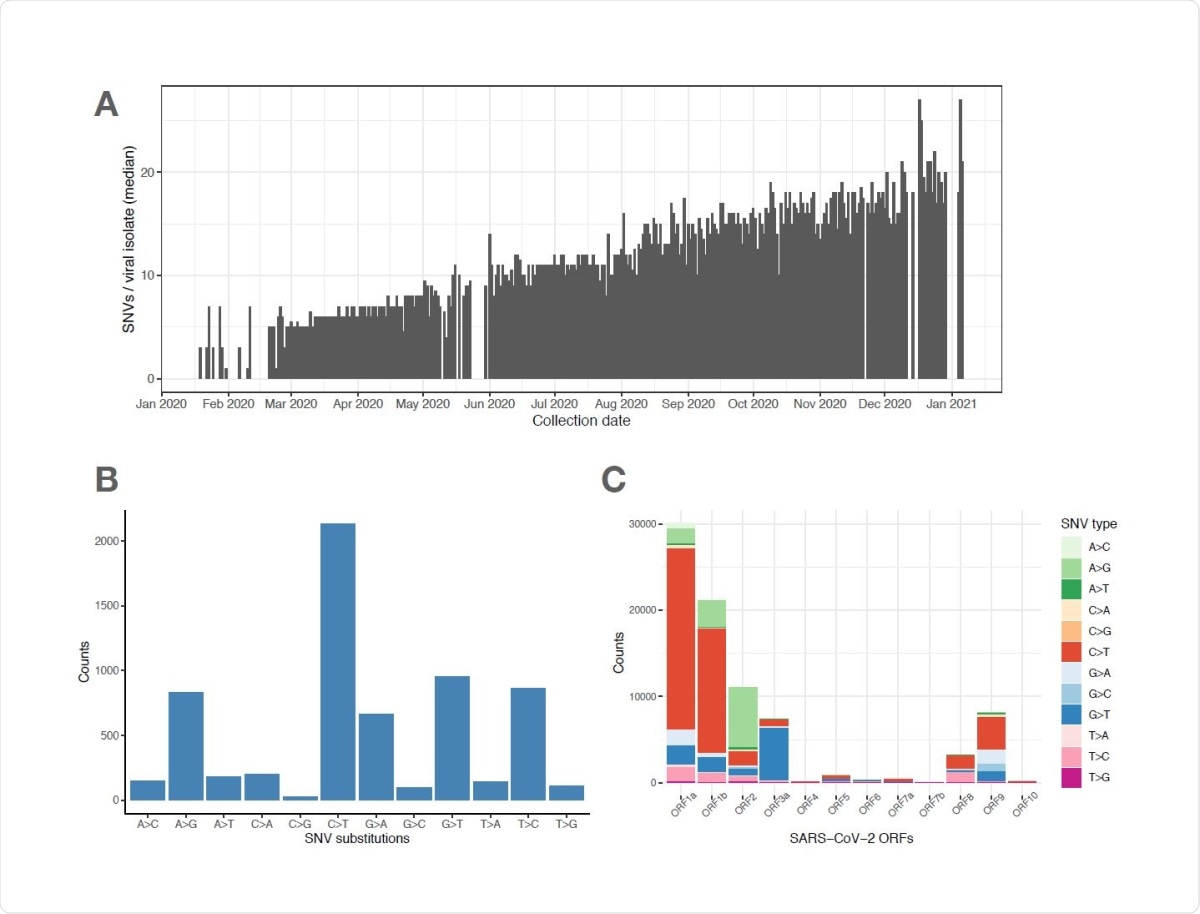 SARS-CoV-2 viral genomes accumulate specific sets of SNVs over time. (A) Frequency histogram showing the steady increase of SNVs called per viral isolate over time (Collection Date), indicating their aggregation in SARS-CoV-2 genomes. (B) Distribution of substitutions at unique SNVs. Two of the most frequent SNV substitutions, C>T and A>G, have been previously associated with APOBEC and ADAR deaminase activities, on the SARS-CoV733 2 ssRNA(+) genome or its dsRNA intermediate, respectively. (C) Graphical representation of SNV substitution profiles at various SARS-CoV-2 ORFs, illustrating intrinsic mutational bias for C>T dominating the mutation pattern in some ORF's (i.e. 1a and 1b), but being masked (likely by selection) in other ORF's like ORF2 encoding Spike region.