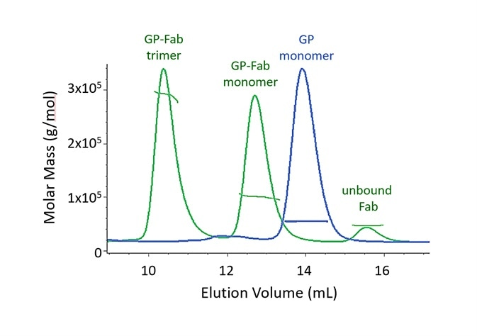 Both monomer and trimer forms of Lassa virus surface glycoprotein, GPCysR4, bind tightly to the Fab fragment of a neutralizing antibody.