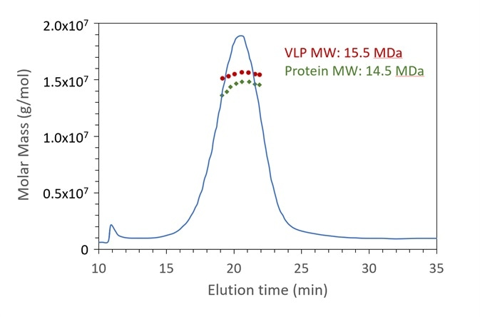 FFF-UV-MALS-RI confirms the expected molar mass of protein capsid and genetic content for a VLP sample. The Rg also agrees with the expected value. Data courtesy A. Citkowicz, Bayer Healthcare Pharmaceuticals. I