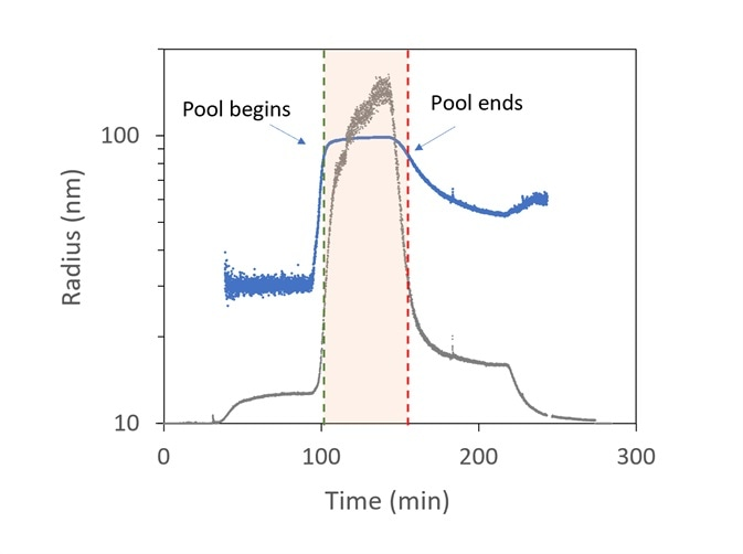 Trace of radius (blue) and light scattering intensity (grey) in OBSERVER software, measured by ultraDAWN, used to control collection of viral fractions during ion-exchange purification.