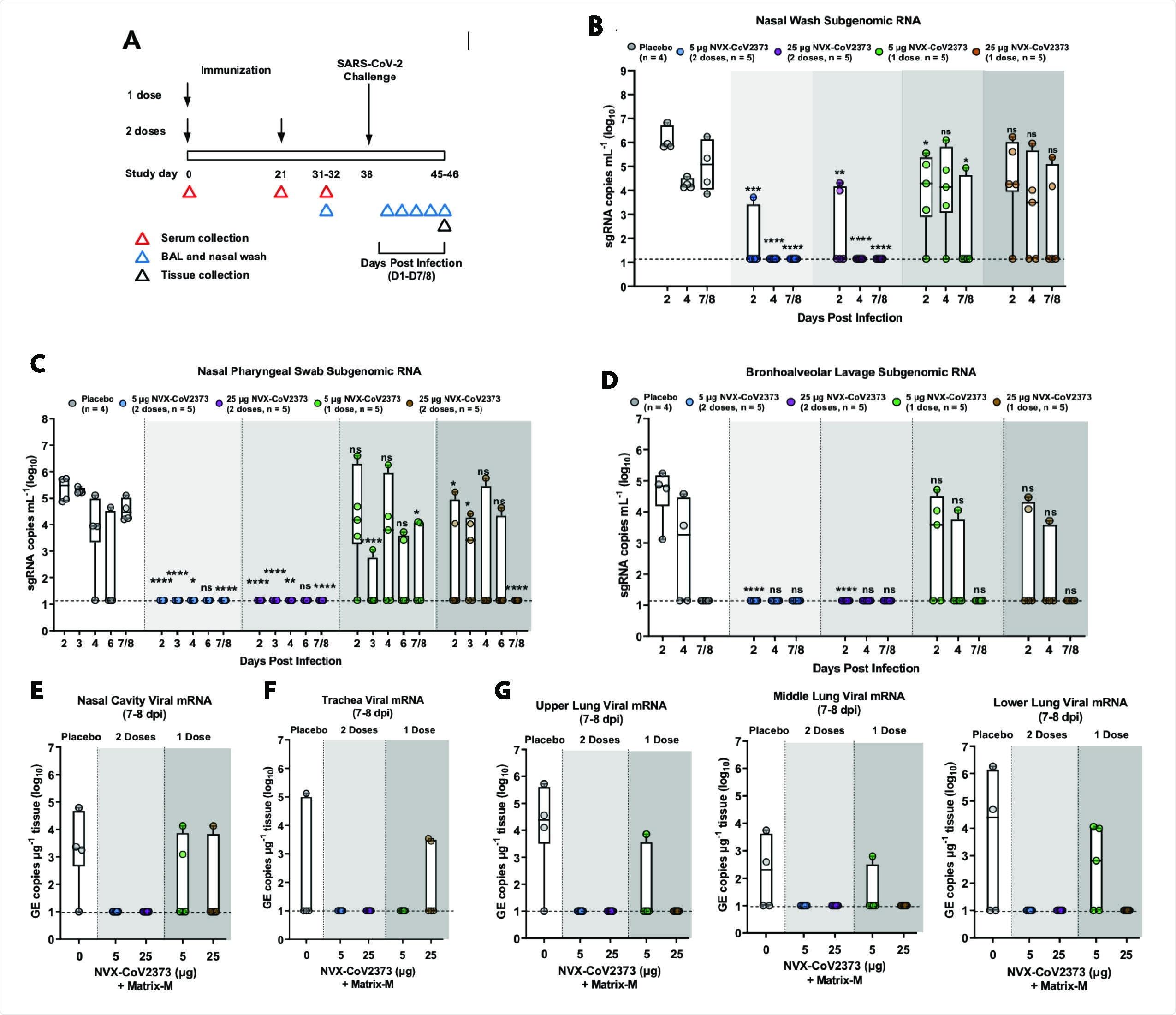 O RNA de Subgenomic e o RNA viral nas vias respiratórias superiores e mais baixas de NVX908 CoV2373 imunizaram macaques do rhesus
