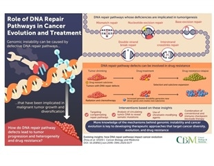 Scientists examine DNA repair pathways and their impact on cancer evolution