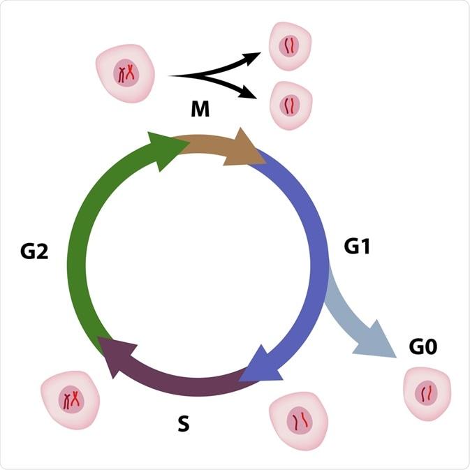 ciclo de pilha