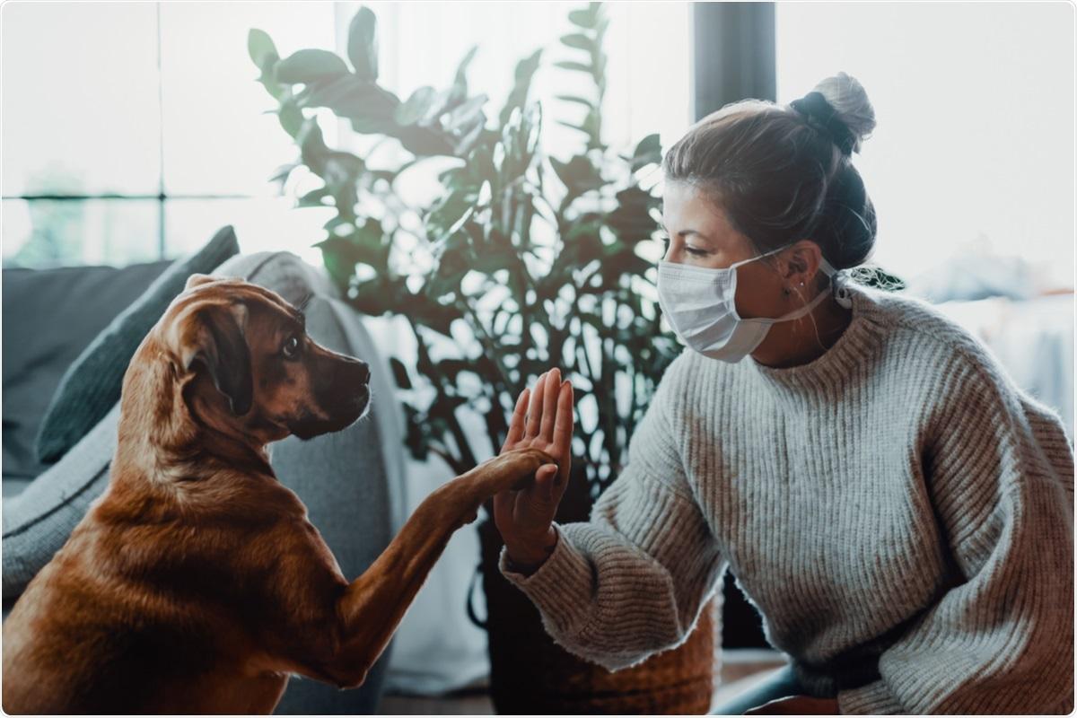 Studio: Risposte umorali a SARS-CoV-2 dai cani sani e malati durante la pandemia COVID-19 in Spagna. Credito di immagine: MT-R/Shutterstock