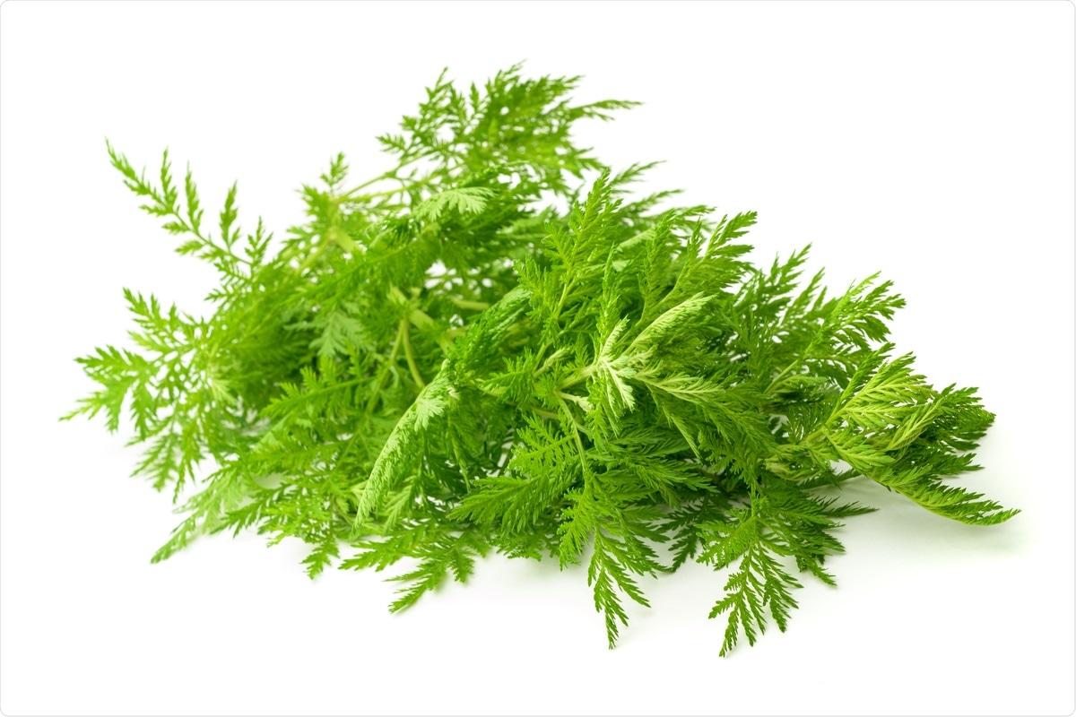 Study: In vitro efficacy of Artemisia extracts against SARS-CoV-2. Image Credit: Scisetti Alfio / Shutterstock Background