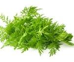 Artemisia plant extracts show potential anti-SARS-CoV-2 activity in vitro