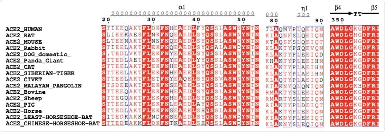 The comparison for the key residues at the binding interfaces after multiple sequence alignment analysis.