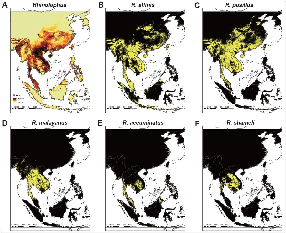 Ecological modeling the geographical distribution of 49 Rhinolophid bat species. (A) Models of 49 Rhinolophus bat species that predict diversity in five regions covering mainland Southeast Asia, Philippines, Java-Sumatra, Borneo and Sulawesi-Moluccas. The map color represents species richness, with up to 23 species projected to co-exist. (B-F) Location distribution of (B) the RaTG13 host species R. affinis, (C) the RpYN06 host species R. pusillus, (D) the RmYN02 host species R. malayanus, (E) the RacCS203 host species R. accuminatus, and (F) the STT182 and STT200 host species R. shameli. The yellow region represents the predicted range of each species.