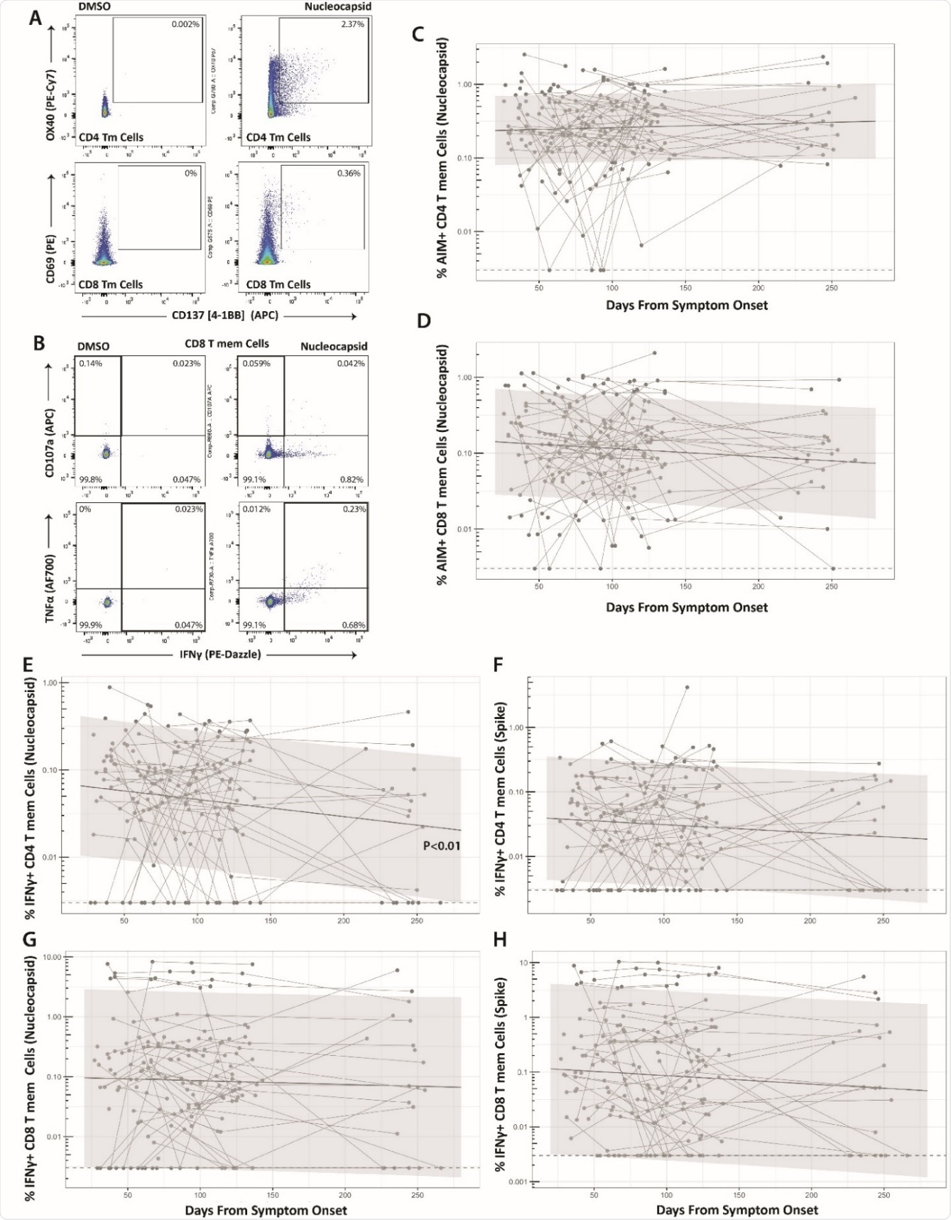 Long-term durability of SARS-CoV-2-specific CD4 and CD8 cell responses. Gating strategy for identifying SARSCoV-2-specific memory T cell responses in the activation-induced marker (AIM) (A) and intracellular cytokine staining (ICS) (B) assays. Percentage of AIM+ N-specific CD4+ (C) and CD8+ (D) T cell responses over time (S-specific responses were similar and are shown in Supplementary Figure 3). Percentage of IFNγ+ Nucleocapsid (N)- or Spike (S)-specific CD4 (E-F) and CD8 (G-H) T cell responses over time. Points and connecting lines represent raw data for each individual. Solid line and shaded region represent the median model prediction and 95% prediction interval from linear mixed effects modeling including individual effects. Dashed lines represent assay limits of detection. T mem = T memory cells.