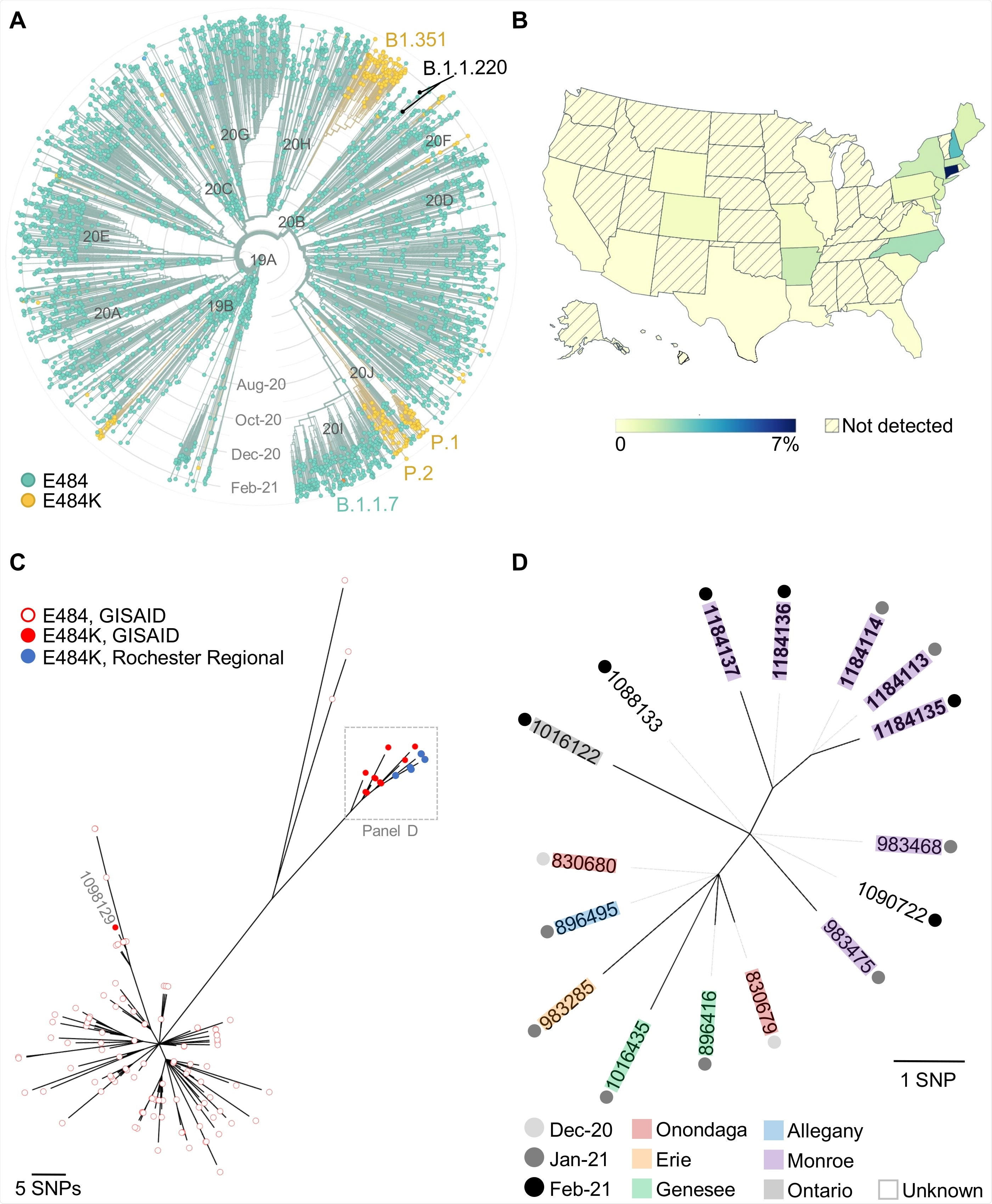 Study: Emergence of the E484K Mutation in SARS-CoV-2 Lineage B.1.1.220 in Upstate New York