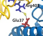 Ai helps identify critical interactions for SARS-CoV-2 spike protein binding to ACE2