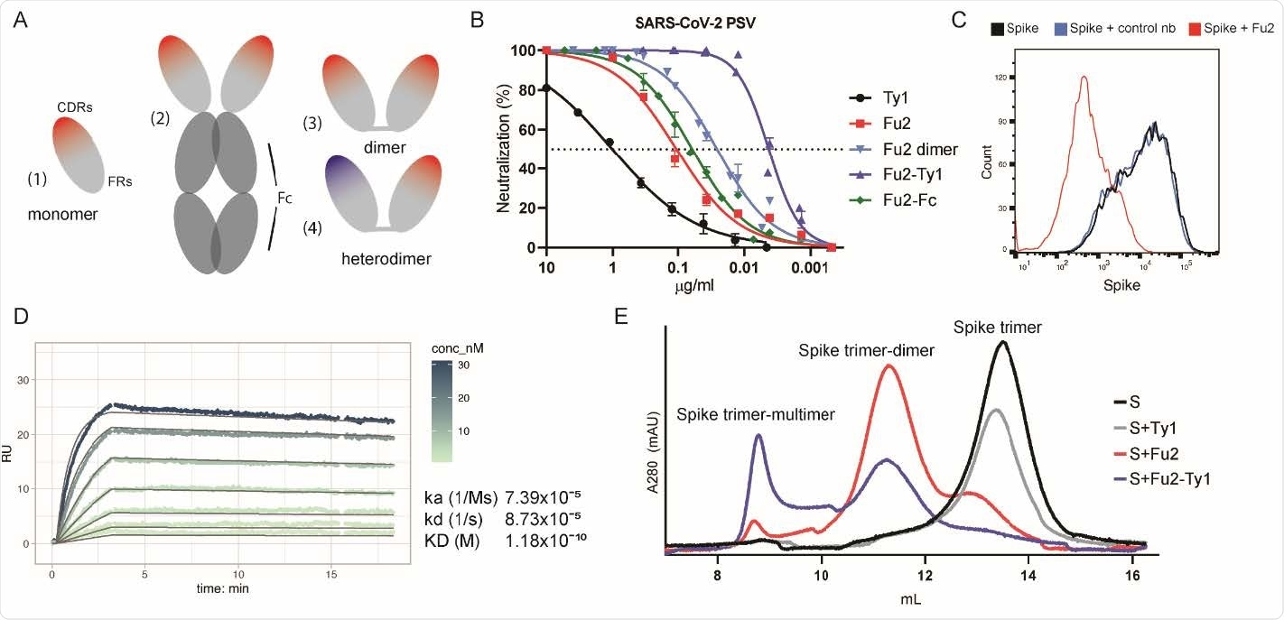 An RBD-specific nanobody neutralizes SARS-CoV-2. (A) Overview of different nanobody constructs used in this study: (1) nanobody monomer, (2) nanobody Fc-fusion, (3) chemically linked nanobody homodimer, (4) chemically linked nanobody heterodimer. (B) A SARS-CoV-2 spike pseudotyped lentivirus (PSV) was incubated with a dilution series of the indicated nanobodies at 37°C for one hour before infecting HEK293T-hACE2 cells. Neutralization (in %) compared to untreated PSV is shown. Data from at least two replicates is shown and the error bars represent the standard deviation. (C) Recombinantly expressed, prefusion stabilized, and fluorescently labeled SARS-CoV-2 spike protein was incubated with a control nanobody specific for IAV NP 29 274 , or Fu2 and used to stain ACE2 expressing HEK293T cells. Cells were analyzed by flow cytometry and a representative histogram is shown. (D) Binding kinetics of Fu2 to the RBD were measured by surface plasmon resonance (SPR). Sensorgram is color-coded based on concentration. The fit is based on the 1:1 Langmuir model and is shown in dark grey solid lines. (E) Recombinantly expressed, prefusion stabilized SARS279 CoV-2 spike protein was run alone or preincubated with the indicated nanobody constructs on a Superose 6 size-exclusion column. Elution profiles (A280) are shown.