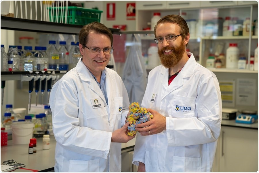 Scientists identify a new way to increase enzymes' life span
