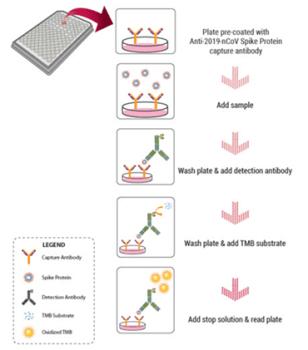 2019-nCoV High Sensitivity S1 Protein ELISA Kit Catalog No: C19S1-876