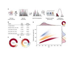 New Nature Communications publication by Mann & Theis Groups harnesses the benefits of large-scale peptide collisional cross section (CCS) measurements and deep learning for 4D-proteomics