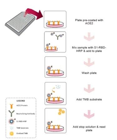 Assay workflow explaining the mechanics of the neutralization Kit.
