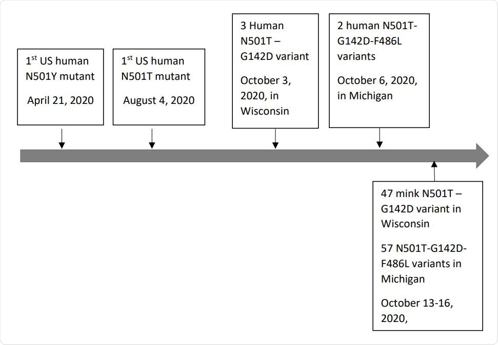 Emerging timeline of human-derived (above the timeline) and mink-derived (below the timeline) SARS-CoV-2 spike protein N501T-G142D and N501T-G142D-F486L variants in the US. Timeline scale is not in proportion.