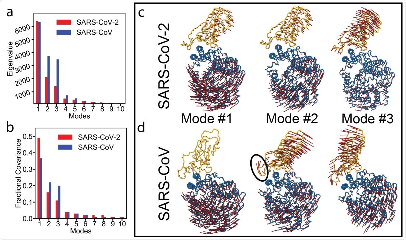 Essential dynamics analysis of two RBD-ACE2 complexes of SARS-CoV-2 and SARS-CoV viruses. (a) Eigenvalues and (b) fractional variance of top-10 modes. Three dominant modes of the complexes with (c) SARS-CoV-2 and (d) SARS-CoV. ACE2 and RBD are shown in blue and yellow, respectively. Motion of a loop in SARS-CoV in mode #2 is highlighted with a black oval.