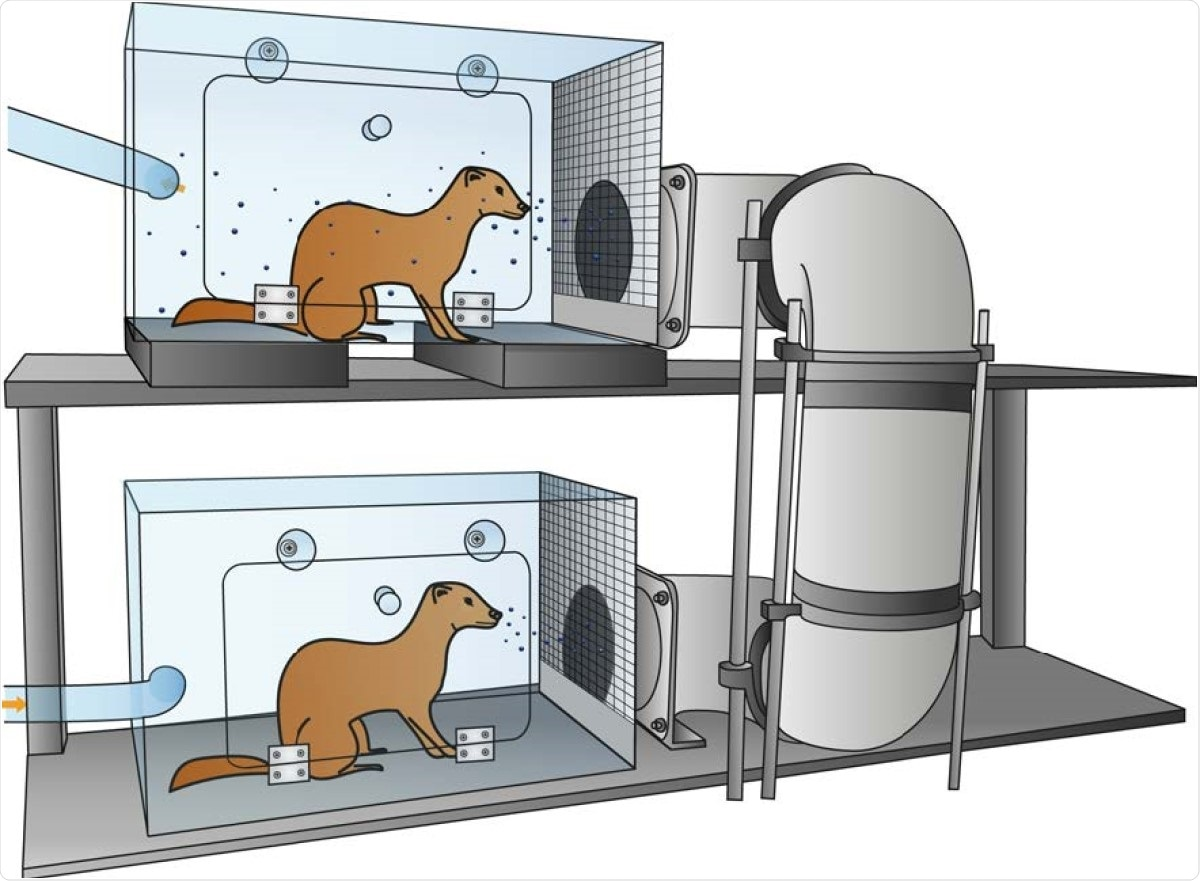 Schematic representation of the set-up to assess transmission over >1m distance. An inoculated donor ferret is housed in the bottom cage and the next day, an indirect recipient ferret is added to the top cage. The cages are connected through a hard duct system consisting of four 90° turns. The system is built of several horizontal and vertical 15cm wide PVC pipes that allow upward airflow from the donor to the indirect recipient animal. The average length of the duct system is 118cm with the shortest and longest length 73 and 163cm, respectively. A steel grid is placed over the inlet and outlet of the duct system. The bottom five cm of the grid was closed to prevent spill-over of food, feces, and other large particles into the tube system. Orange arrows indicate the direction of airflow (100L/min). Set-ups were placed in class III isolators in a biosafety level 3+ laboratory.