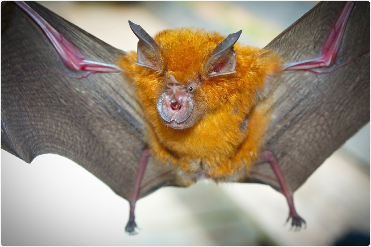 Newly-discovered bat coronavirus 94.5% identical to SARS-CoV-2 – News-Medical.net