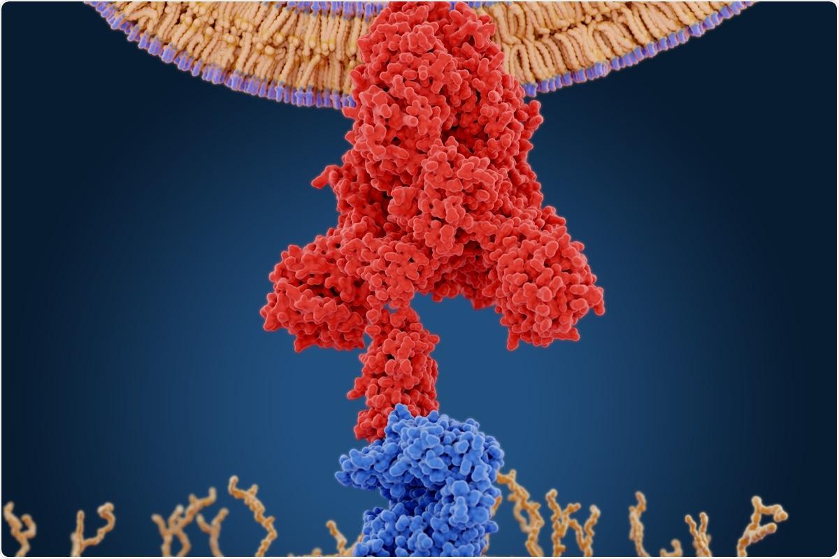 Study: Synthetic protein antigens for COVID-19 diagnostics. Image Credit: Juan Gaertner / Shutterstock