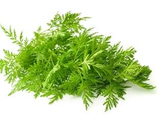 Do Artemisia annua L. compounds have SARS-CoV-2 antiviral potential?