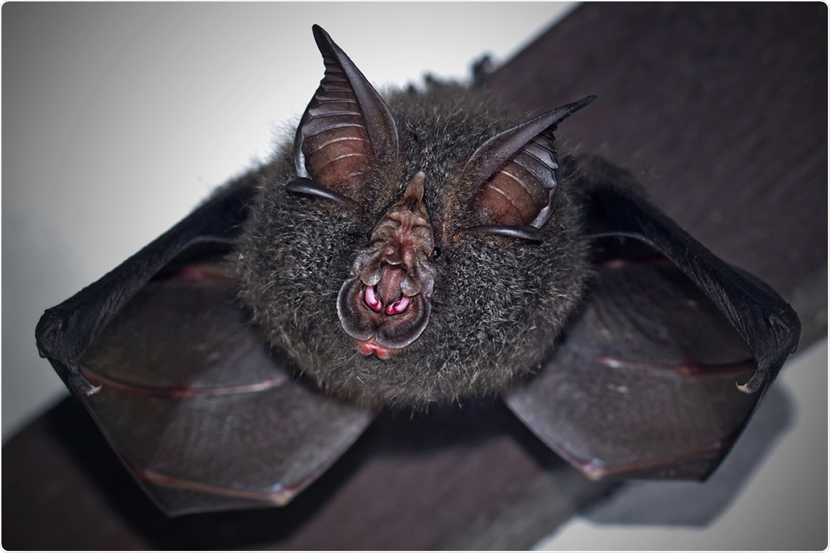 Review: Coronaviruses in humans and animals: the role of bats in viral evolution. Image Credit: Worraket / Shutterstock