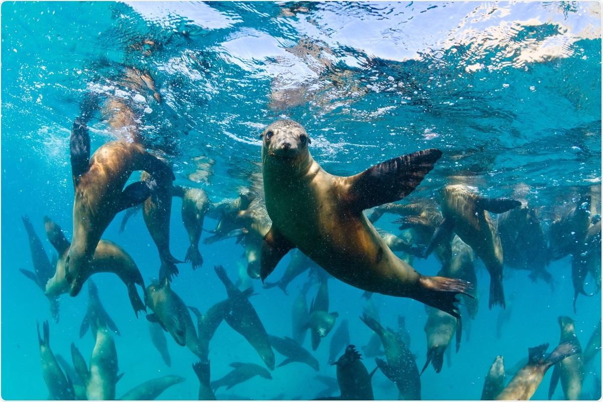 SARS-CoV-2 in wastewater may pose risks to marine mammals