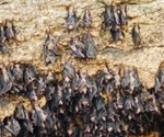 How do viruses evolve in bats?