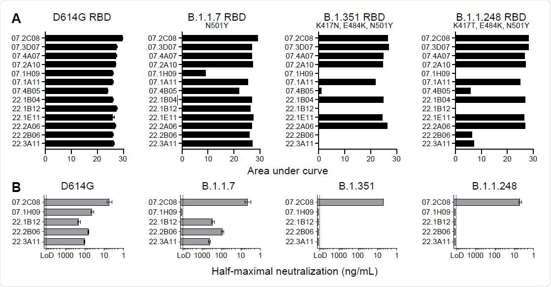 mAb 2C08 potently neutralizes diverse SARS-CoV-2 strains. (A and B) ELISA binding to recombinant RBD from (A) and neutralizing activity in Vero-TMPRSS2 cells against (B) indicated SARS-CoV-2 strains by the indicated mAbs. ELISA binding to D614G RBD previously reported in (29). Baseline for area under the curve was set to the mean + three times the standard deviation of background binding to bovine serum albumin. Dotted lines indicate limit of detection. Bars indicate mean ± SEM. Results are from one experiment performed in duplicate (panel A, D614G) or in singlet (panel A, B.1.1.7, B.1.351, and B.1.1.248), or two experiments performed in duplicate (panel B).
