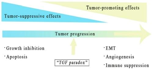 TGF-β对肿瘤的促进和抑制作用。