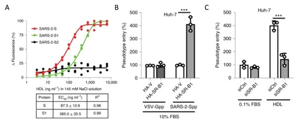 A) S protein S1 subunit binds to components of HDL. b) HDL receptor SR-B1 enhances SARS-CoV-2 entry.