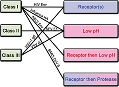 Classification of fusion proteins and triggering mechanisms with examples of corresponding viruses