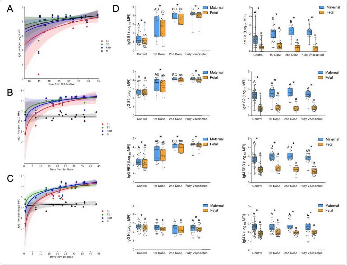 Temporal changes of the acute immune response to SARS-Cov2 infection and to vaccination in pregnancy. (A) Analysis of the change in maternal IgG during the first 50 days after positive RT-PCR, derived from the GA of positivity and the GA of delivery (see the full timeline data for immune response across pregnancy in Figure 1). (B) Analysis of maternal IgG response to BNT162b2 vaccination derived from the GA of the first vaccine and the GA of delivery. A second dose was administered on Day 21. . (C) Analysis of the temporal changes of fetal IgG following BNT162b2 vaccination derived from the GA of the first vaccine and the GA of delivery. A second dose was administered on Day 21; shaded areas in (A), (B) and (C) show the 95% confidence interval (D) Serological data of maternal-fetal pairs was derived from control, unvaccinated serologically negative (N-) mothers; as well as vaccinated mothers grouped for deliveries in the first 3 weeks after the 1st vaccine; deliveries during the first week after the 2nd vaccine; and fully vaccinated who delivered more than a week after the second vaccine. Left columns, IgG; right columns, IgM; from top to bottom, serological response to S1, S2, RBD, and N. Statistical significance: A,B,C above the blue bars indicate significant differences among the groups in maternal antibodies, while a,b,c above the orange bars indicate significant differences among the groups in fetal antibodies (Kruskall–Wallis one-way ANOVA test, following by Dunn