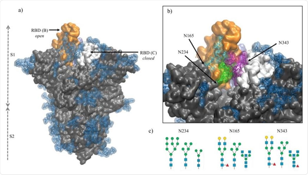 Panel a) Structure of the fully glycosylated SARS-CoV-2 S (PDBid 6VYB)6 ectodomain. The protein is shown in grey with the RBDs of chain B and C highlighted in orange and white, respectively; the glycan shield is highlighted in blue. Panel b) Close up on the open pockets with the N-glycans at the strategic positions N234, N165, and N343 highlighted in green, cyan and purple, respectively. Panel c) N-glycans considered in the different models studied in this work, represented through the SNFG23 and drawn with DrawGlycan24 (http://www.virtualglycome.org/DrawGlycan/). Molecular rendering done with VMD25.