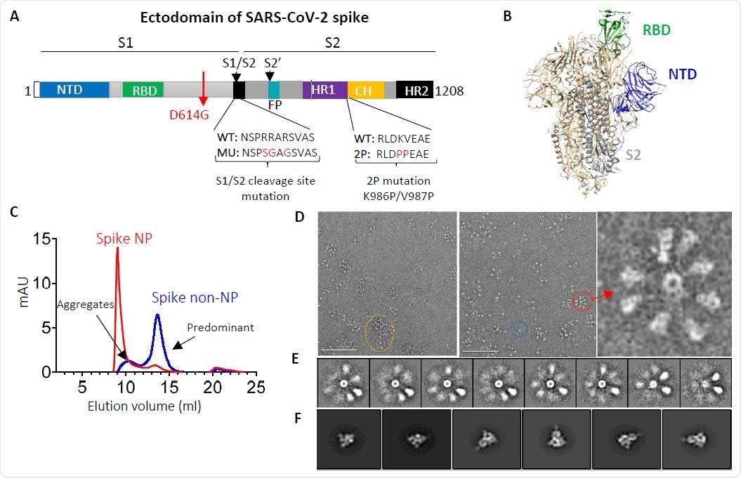 Ectodominio de pico de SARS-CoV-2 y ectodominio de pico trimérico que presenta nanopartículas.  (A) Esquema del ectodominio de proteína de pico de SARS-CoV-2.  NTD: dominio N-terminal;  RBD: dominio de unión al receptor;  S1 / S2 = sitio de escisión de proteasa S1 / S2;