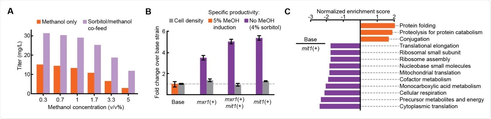 Improved productivity and decreased stress in methanol-free RBD expression (A) Titer of RBD secretion from the base strain in 3 mL plate culture. (B) Performance of three engineered strains in 3 mL plate culture. (C) Enriched gene sets between the base strain (orange) and the mit1+ strain (purple).