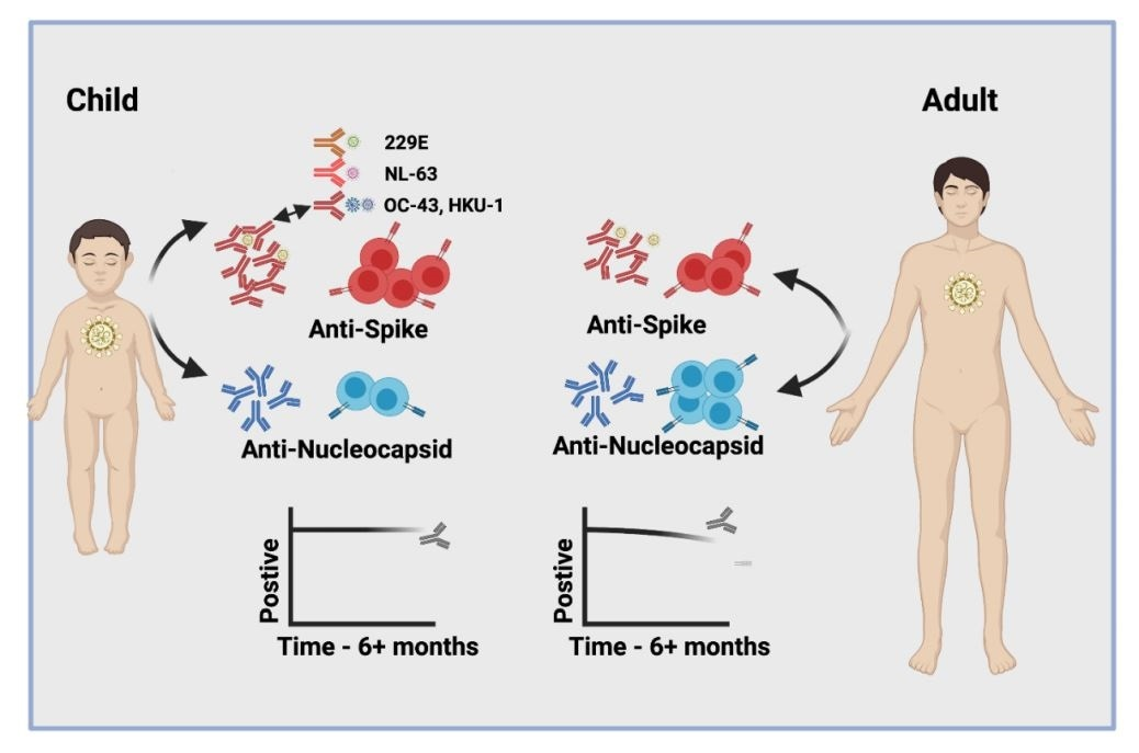 Children develop strong, long-lasting immunity after SARS-CoV-2 infection
