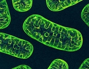 Mitochondrial DNA mutations can reduce death risk in people with bowel cancer