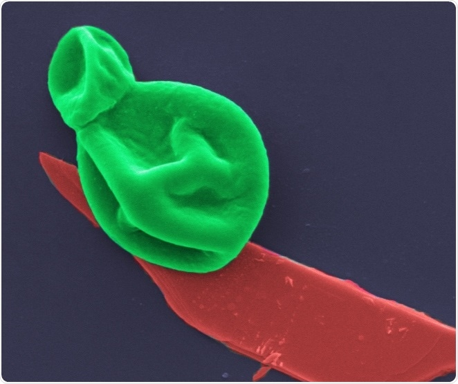 New nanothin coating could be used to treat deadly bacterial and fungal infections