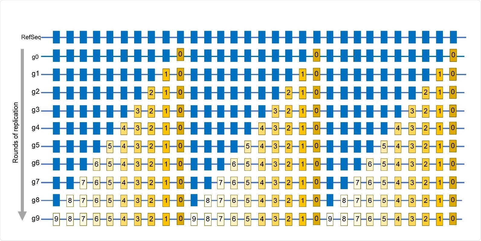 Simplified schematic of mutations accumulation in virus population. Mutations are identified by comparing a sequence of a viral isolate with a reference sequence (RefSeq). Positions in which mutations are found in at least one isolate are shown by rectangles. Blue rectangles are positions same as in RefSeq. g0 – A genome of virus quasispecies starting a population that may already have some differences from RefSeq. g1 – g9 rounds of replication generating additional mutations, which are numbered same as the generation in which a mutation event had occurred. Mutations occurring in later generations would be present in smaller fractions (reflected by the decreasing yellow color density) within the population. The entire set of independent mutation events would be described by the list in which every mutation is represented only once, regardless of the number of genomes where it is found. In this population, such a list is represented by the g9 genome.