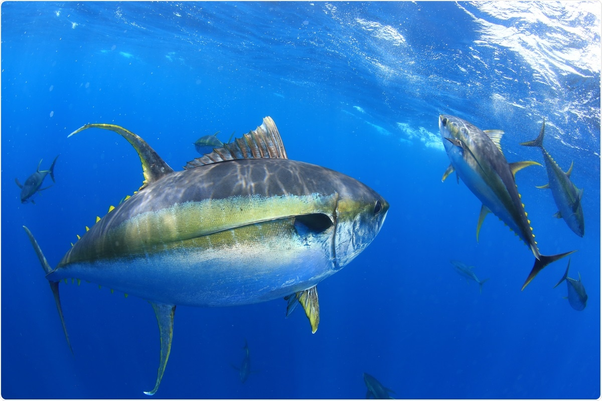 Study: Identification of tuna protein-derived peptides as potent SARS-CoV-2 inhibitors via molecular docking and molecular dynamic simulation. Image Credit: Al McGlashan / Shutterstock