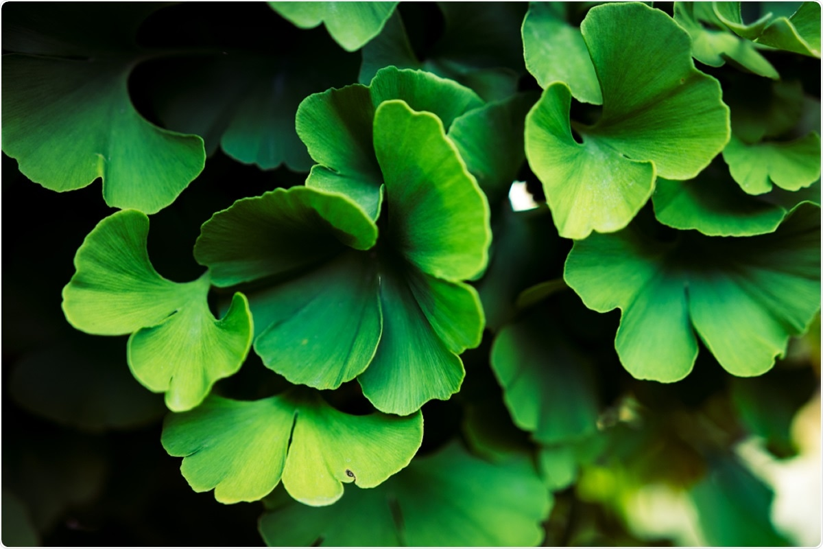 Study: Discovery of naturally occurring inhibitors against SARS-CoV-2 3CLpro from Ginkgo biloba leaves via large-scale screening. Image Credit: Damian Lugowski / Shutterstock