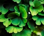 Research suggests that Ginkgo biloba extract contains naturally occurring inhibitors against SARS-CoV-2