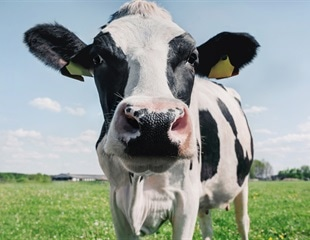 Could cow's milk provide some passive immunity against COVID-19?