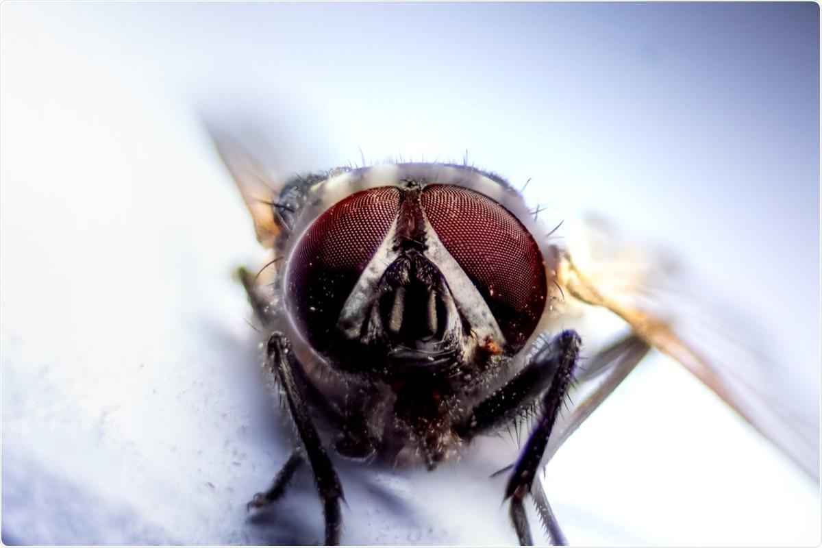 研究:房屋苍蝇SARS-COV-2的机械传播。图片信用:srinivasan.clicks / shutterstock