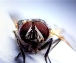House flies can carry SARS-CoV-2 up to 24 hours after exposure, study finds