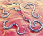 Preventing Toxocariasis