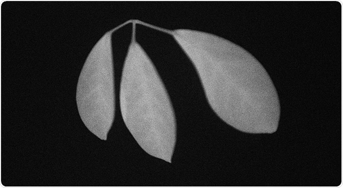 Delayed fluorescence of ornamental plants (exposure for 10 seconds after 10 seconds of excitation light quenching).